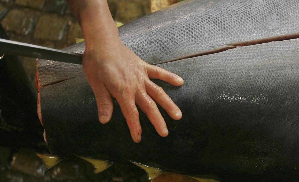 9. TOKIO - TARG RYBNY TSUKIJI: Pracownik tnie tuńczyka na mniejsze porcje. (Foto: Koichi Kamoshida/Getty Images)