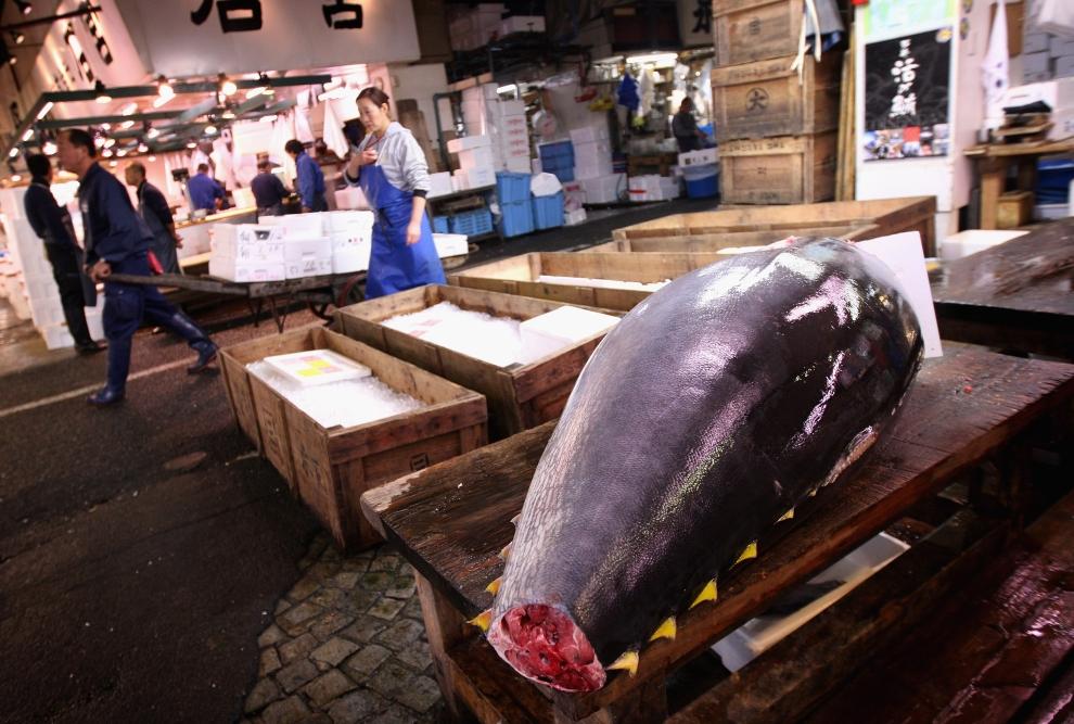 12. TOKIO - TARG RYBNY TSUKIJI: Kadłub tuńczyka zółtopłetwego zostanie wkrótce pocięty na mniejsze kawłaki. (Foto: Chris Jackson/Getty Images)