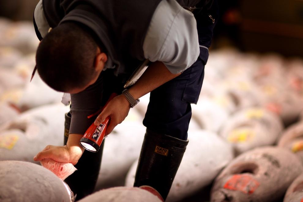 TOKIO - TARG RYBNY TSUKIJI: Pracownik sprawdza jakość sprzedawanych ryb. (Foto: Chris Jackson/Getty Images)