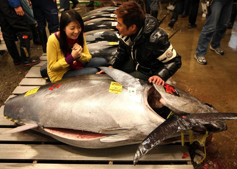 21. TOKIO - TARG RYBNY TSUKIJI: Reporterzy porannego bloku telewizyjnego przyglądają się olbrzymiemu tuńczykowi. (Foto: Koichi Kamoshida/Getty Images)