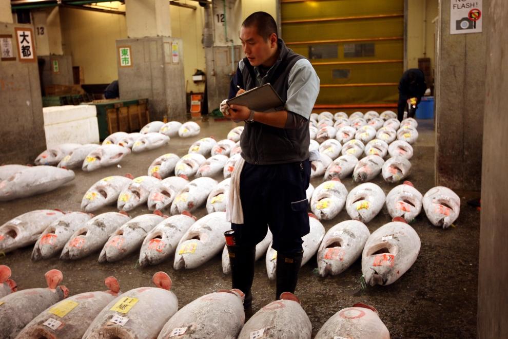 3. TOKIO - TARG RYBNY TSUKIJI: Jakość produktów sprzedawanych podczas aukcji potwierdzana jest wieloma kontrolami. (Foto: Chris Jackson/Getty Images)