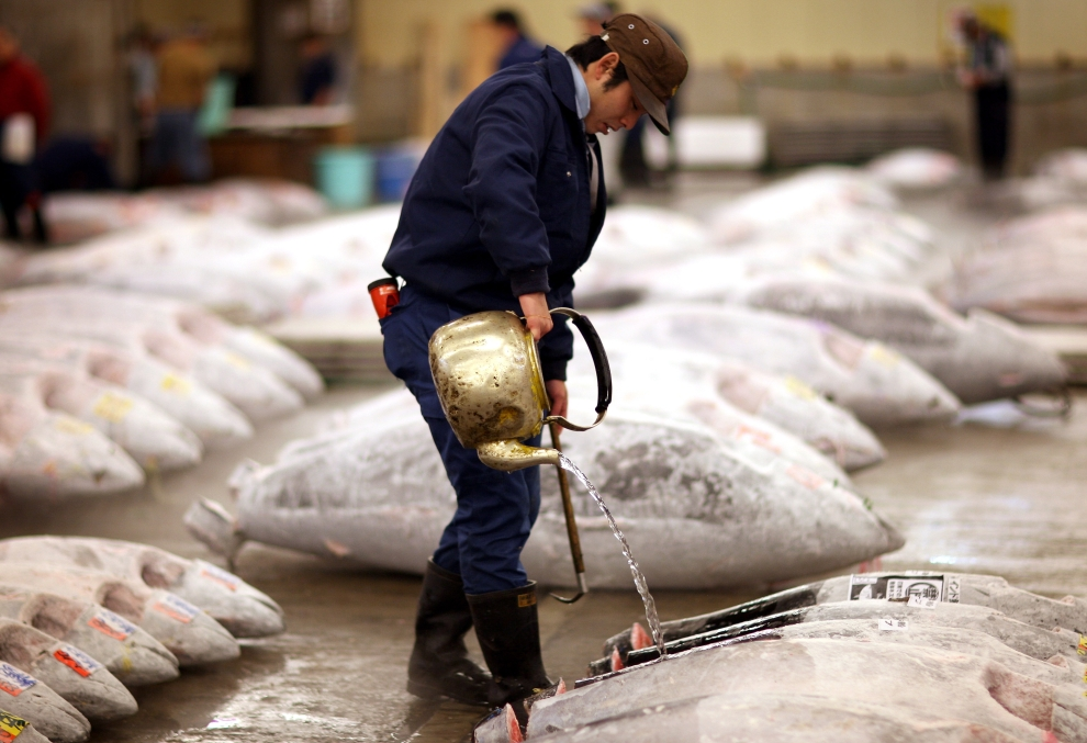 4. TOKIO - TARG RYBNY TSUKIJI: Zamrożone ryby są rozmrażane przed rozpoczęciem aukcji. (Foto: Chris Jackson/Getty Images)