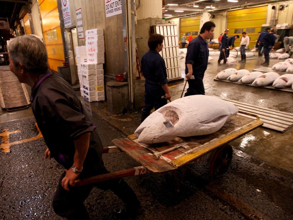 7. TOKIO - TARG RYBNY TSUKIJI: Pracownik targu przewozi zamrożonego tuńczyka z magazynu. (Foto: Chris Jackson/Getty Images)