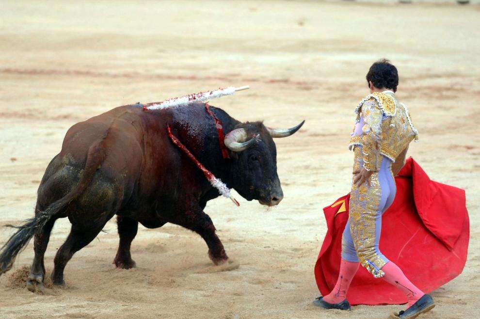 20. HISZPANIA, Pampeluna: Matador Miguel Abellan walczy z bykiem podczas wieczornej corridy. (Foto: Ander Gillenea/Getty Images)