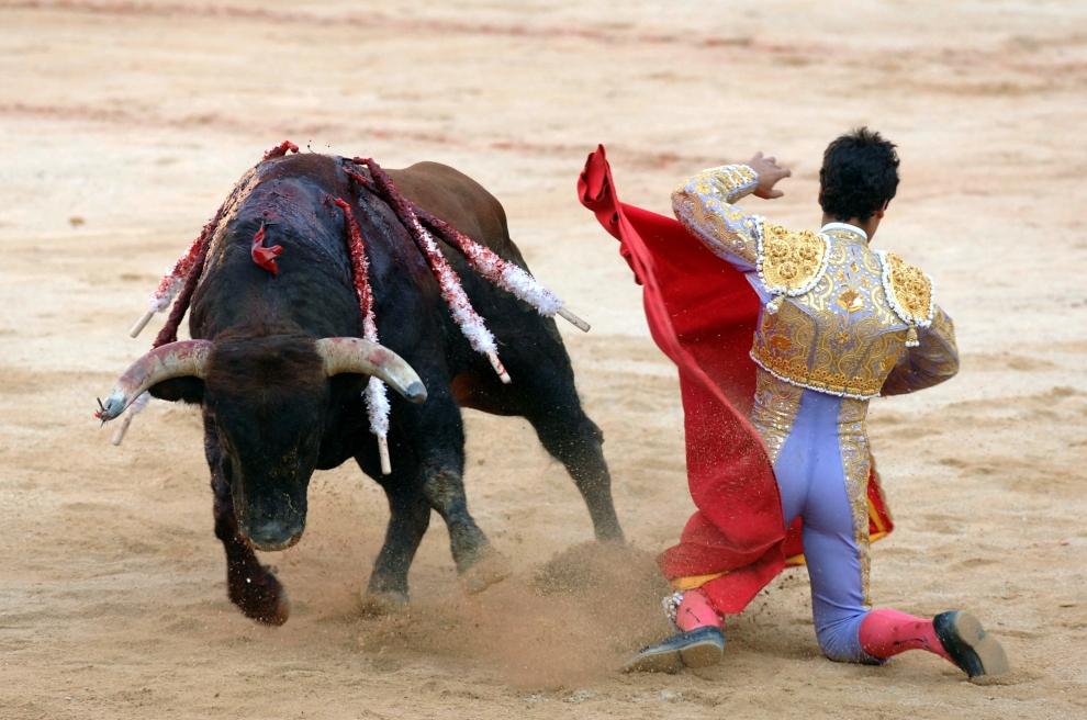 21. HISZPANIA, Pampeluna: Matador Miguel Abellan w pojedynku z bykiem. (Foto: Ander Gillenea/Getty Images)