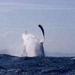 Wielorybnicy i ekolodzy