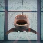 Pływając z rekinami