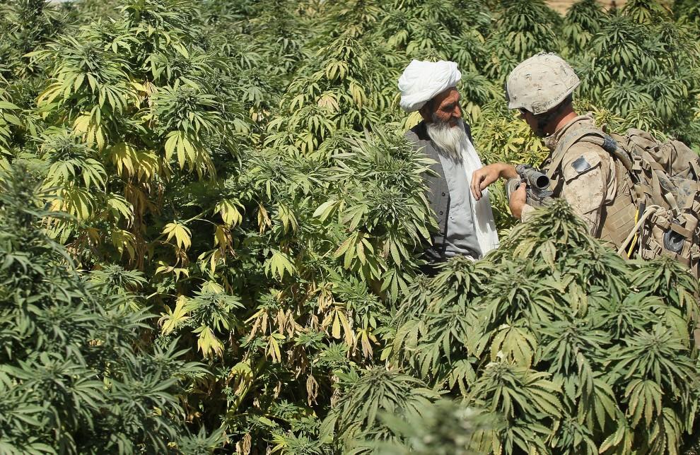 22. AFGANISTAN, Kajaki, 10 października 2010: Żołnierz rozmawia z rolnikiem na którego polu rośną konopie. (Foto: Scott Olson/Getty Images)