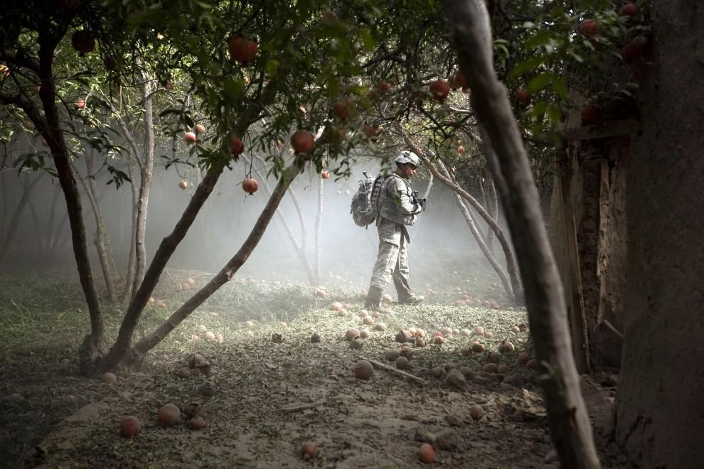 24. AFGANISTAN, Chahar Qolbah, 10 września 2010: Amerykański żołnierz w ostrzelanym gaju pomarańczowym. AFP PHOTO/PATRICK BAZ