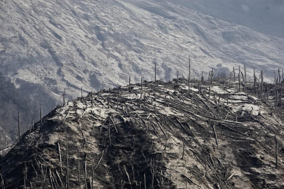 7. INDONEZJA, Yogyakarta, 27 października 2010: Kikuty drzew spalonych przez chmurę gorącego pyłu. (Foto: Ulet Ifansasti/Getty Images)