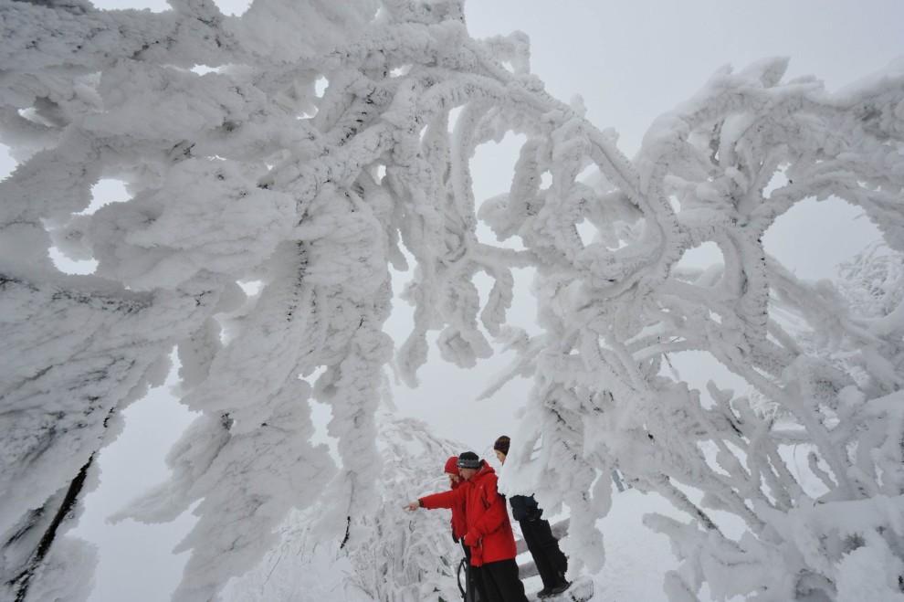 16. NIEMCY, Grosser Feldberg, 28 listopada 2010: Pokryte śniegiem zbocze góry Grosser Feldberg. AFP PHOTO ARNE DEDERT