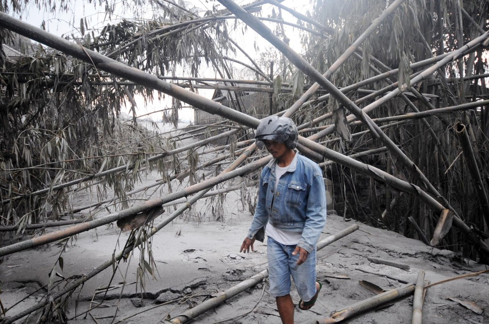 23. INDONEZJA, Sleman, 6 listopada 2010: Jeden z ochotników szuka ofiar pod zwalonymi bambusami. AFP PHOTO / SONNY TUMBELAKA