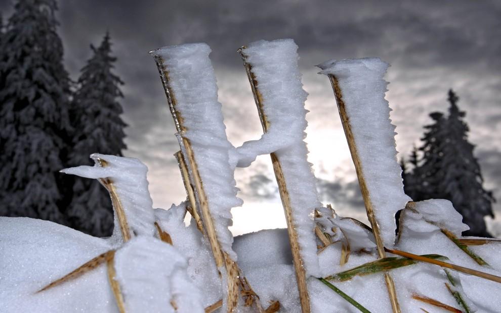 28. NIEMCY, Auerberg , 25 listopada 2010: Zmrożony śnieg na sterczących źdźbłach trawy. AFP PHOTO KARL-JOSEF HILDENBRAND