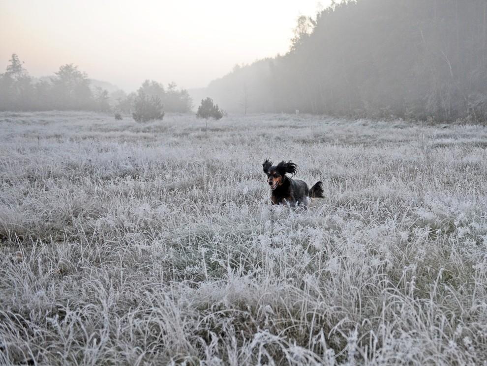 2. POLSKA, Warszawa, 9 października, 2010: Pies biega po lace pokrytej szronem. AFP PHOTO / JANEK SKARZYNSKI