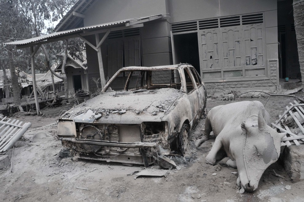 2. INDONEZJA, Argomulyo, 5 listopada 2010: Martwa krowa leży obok spalonego samochodu w wiosce oddalonej o 18 km od krateru. AFP PHOTO / CLARA PRIMA