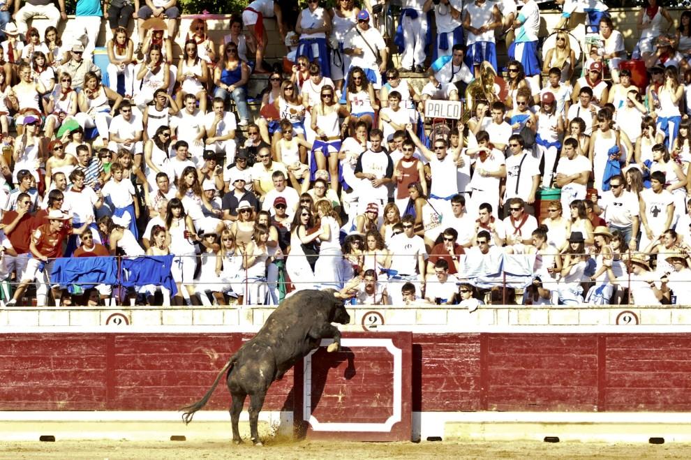 21. HISZPANIA, Tafalla, 18 sierpnia 2010: Byk wskakuje na trybuny podczas corridy w Pampelunie.  AFP PHOTO / ALBERTO GALDONA.