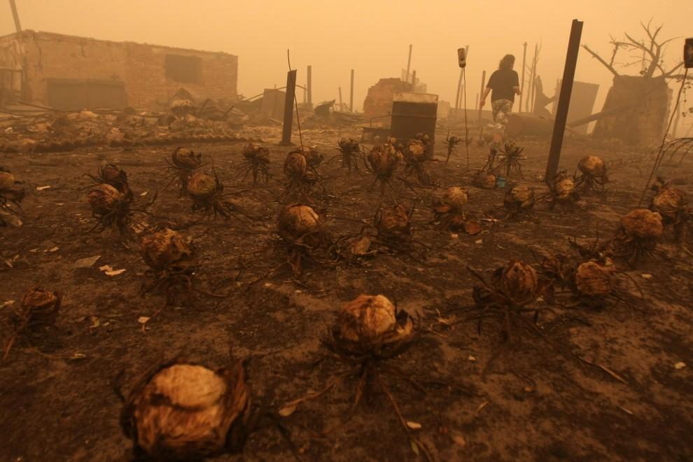 25. ROSJA, Mochowoje, 3 sierpnia 2010: Spalone zabudowania i pole kapusty we wsi Mochowoje. AFP PHOTO / ANDREY SMIRNOV