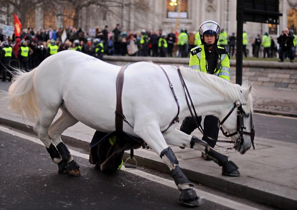 33. WIELKA BRYTANIA, Londyn, 9 grudnia 2010: Policjantka stara się opanować spłoszonego konia. AFP PHOTO/BEN STANSALL