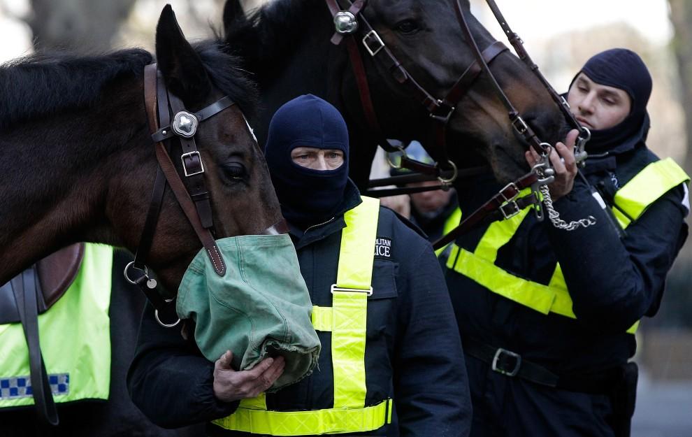 37. WIELKA BRYTANIA, Londyn, 9 grudnia 2010: Policjanci karmią konie przed rozpoczęciem akcji porządkowej. (Foto: Matthew Lloyd/Getty Images)