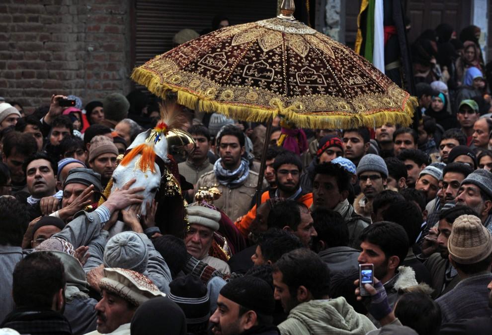4. INDIE, Śrinagar, 17 grudnia 2010: Mężczyźni starają się dotknąć konia, który symbolizuje wierzchowca Husajna ibn Alego. AFP PHOTO / Tauseef MUSTAFA