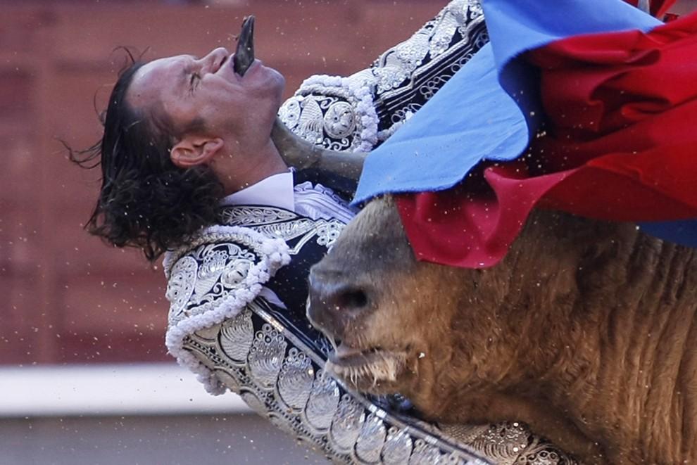 55. HISZPANIA, Madryd, 21 maja 2010: Julio Aparicio ugodzony rogiem przez byka w trakcie San Isidro Feria. AFP PHOTO/ ALBERTO SIMON
