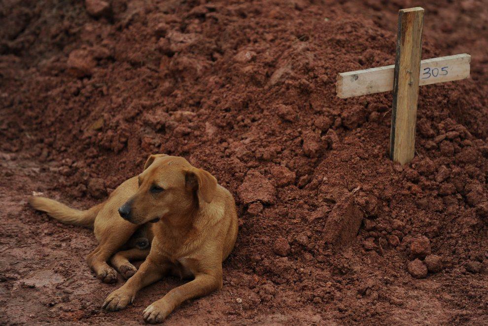 """13. BRAZYLIA, Teresópolis, 15 stycznia 2011: Pies o imieniu """"Leao"""" drugi dzień z rzędu leży przy grobie swojej właścicielki – ofiary osunięcia się ziemi. AFP PHOTO/VANDERLEI ALMEIDA"""
