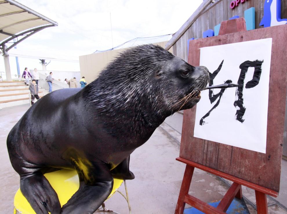 """19. JAPONIA, Jokohama, 3 stycznia 2011: Ośmioletni lew morski o imieniu """"Leo"""" w trakcie pisania słowa """"królik"""". AFP PHOTO / Yoshikazu TSUNO"""