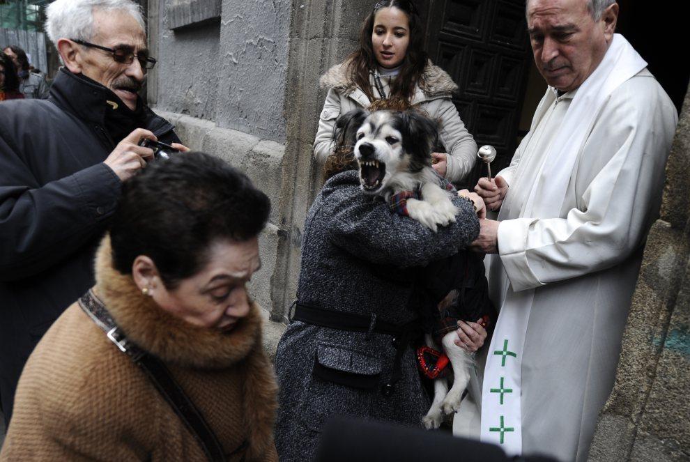 20. HISZPANIA, Madryt, 17 stycznia 2011: Zdenerwowany pies podczas rytualnego święcenia zwierząt. AFP PHOTO/ PIERRE-PHILIPPE MARCOU