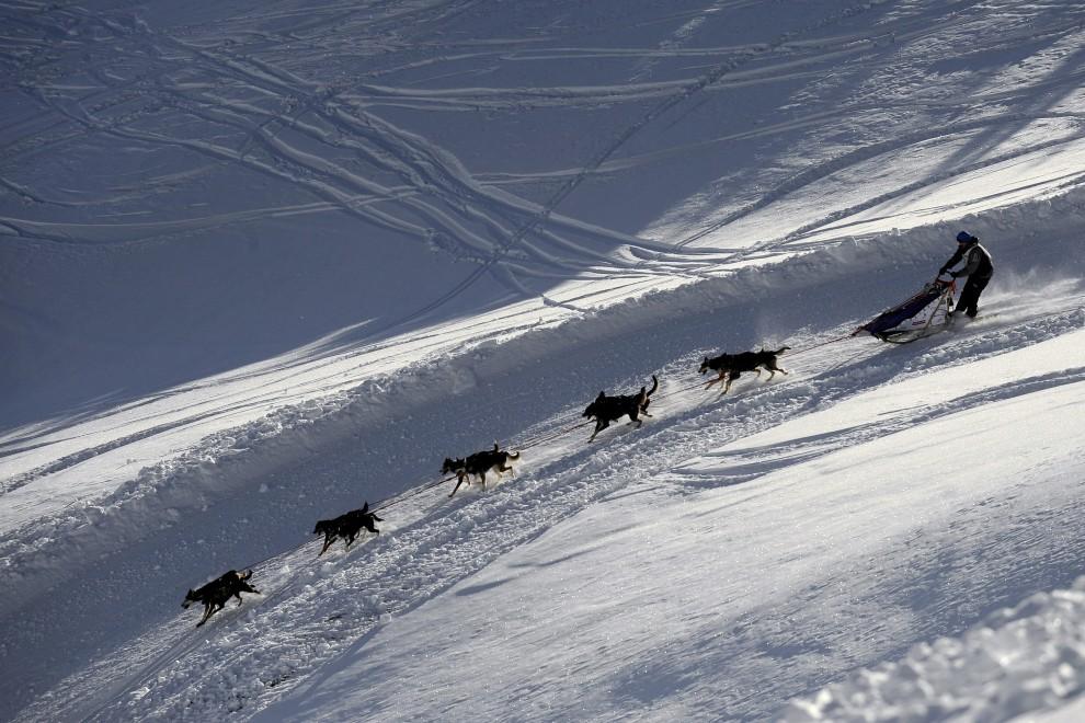 """23. FRANCJA, Morzine, 14 stycznia 2009: Pędzący psi zaprzęg na trasie """"La Grande Odyssee 2009"""". AFP PHOTO / FRED DUFOUR"""
