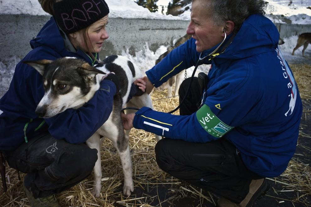 """30. FRANCJA, Morzine, 8 stycznia 2011: Weterynarz bada stan zdrowia psa uczestniczącego w  """"La Grande Odyssee 2011"""". AFP PHOTO / JEAN-PHILIPPE KSIAZEK"""