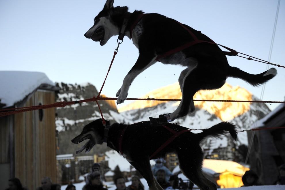 """32. FRANCJA, Morzine, 11 stycznia 2009: Psi zaprzęg niecierpliwi się przed startem do """"La Grande Odyssee 2009"""". AFP PHOTO / FRED DUFOUR"""