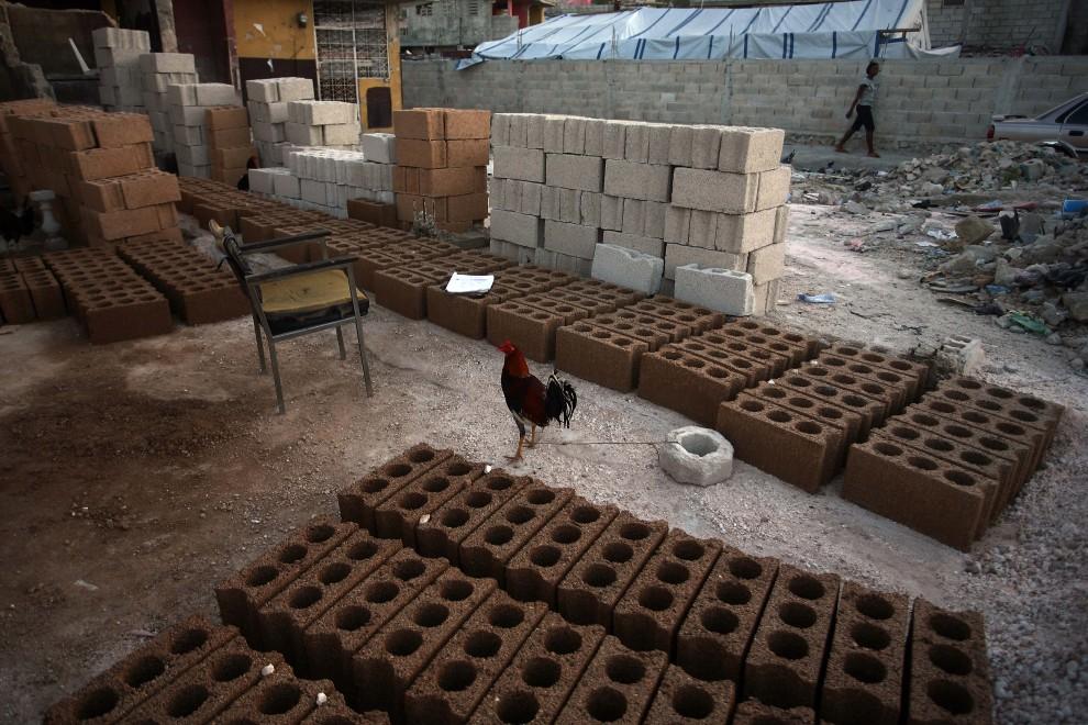 37. HAITI, Port-au-Prince, 5 stycznia 2011: Kogut pośród świeżo wyprodukowanych cegieł. AFP PHOTO / Hector RETAMAL