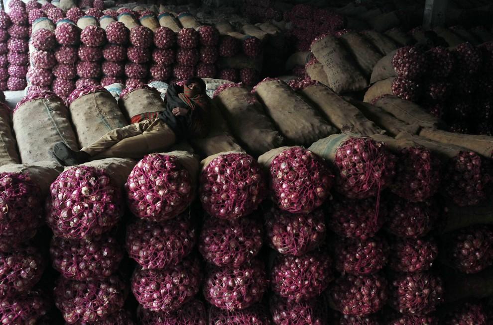 8. PAKISTAN, Lahore, 7 stycznia 2011: Sprzedawca cebuli na największym bazarze w Lahore. AFP PHOTO/ARIF ALI