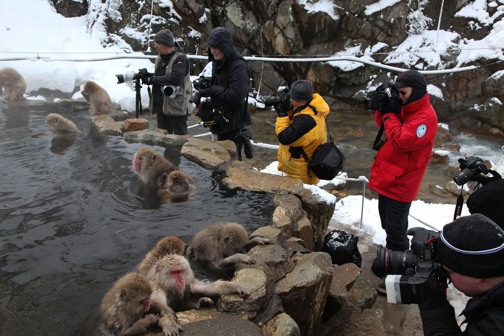 11. JAPONIA, Yamanouchi, 30 stycznia 2010: Turyści i fotoreporterzy fotografują makaki z Yamanouchi. (Foto: Koichi Kamoshida/Getty Images)