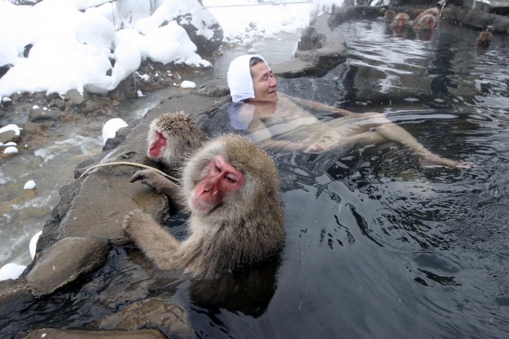 12. JAPONIA, Jigokudani, 23 stycznia 2005: Mężczyzna w towarzystwie małp relaksuje się ciepłej wodzie. (Foto: Koichi Kamoshida/Getty Images)
