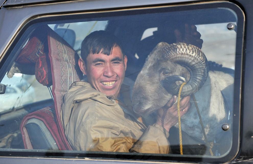 14. AFGANISTAN, Kabul, 18 lutego 2011: Mężczyzna z baranem, którego chce wystawić do walki. AFP PHOTO / Massoud HOSSAINI (Foto: Getty Images)