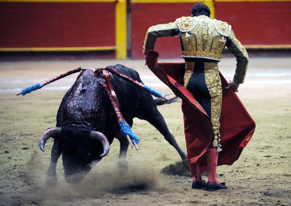 "16. KOLUMBIA, Medellín, 19 lutego 2011: Manuel Jesus aka ""El Cid"" walczy z bykiem na arenie w Medellín. AFP PHOTO/ Raul ARBOLEDA"