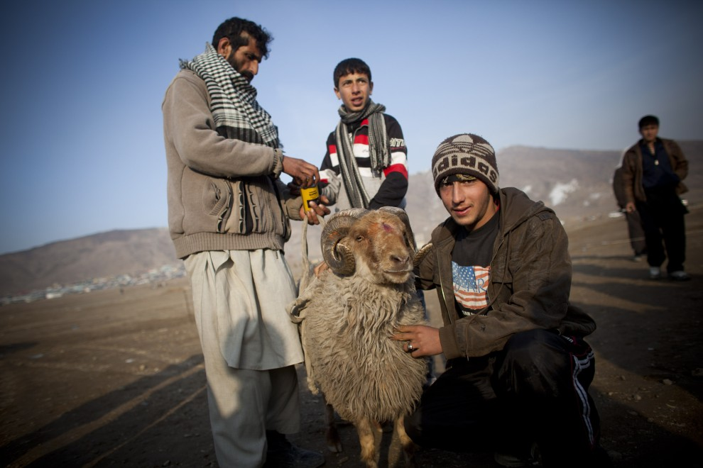 17. AFGANISTAN, Kabul, 18 lutego 2011: Właściciel prezentuje barana, który będzie walczył na arenie na przedmieściach Kabulu. (Foto: Getty Images)