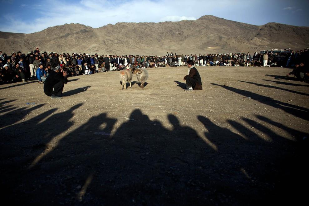 19. AFGANISTAN, Kabul, 18 lutego 2011: Mężczyźni przyglądają się walczącym baranom. (Foto: Getty Images)
