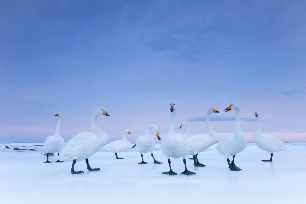 """19.JAPONIA, Hokkaido, styczeń 2010: Włoch Stefano Unterthiner zdobył II nagrodę World Press Photo w kategorii """"Natura - reportaż"""". PAP/EPA."""