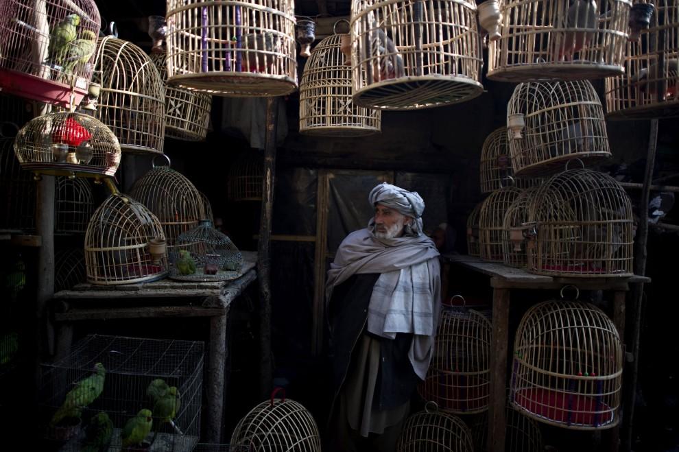 20. AFGANISTAN, Kabul, 15 lutego 2011: Sprzedawca ptaków na bazarze w Kabulu. AFP PHOTO / DMITRY KOSTYUKOV