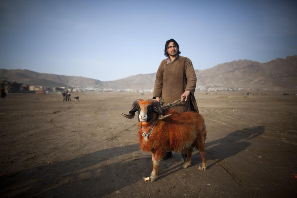24. AFGANISTAN, Kabul, 18 lutego 2011: Mężczyzna prezentuje swojego barana. (Foto: Getty Images)