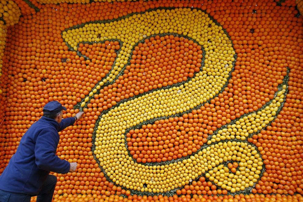 4. FRANCJA, Menton, 17 lutego 2011: Mężczyzna układa pomarańcze i cytryny we wzór węża. AFP PHOTO SEBASTIEN NOGIER