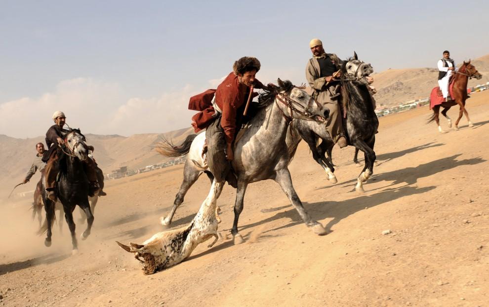 9. AFGANISTAN, Kabul, 6 listopada 2009: Zawodnik podnosi z ziemi kozę. AFP PHOTO/Massoud HOSSAINI