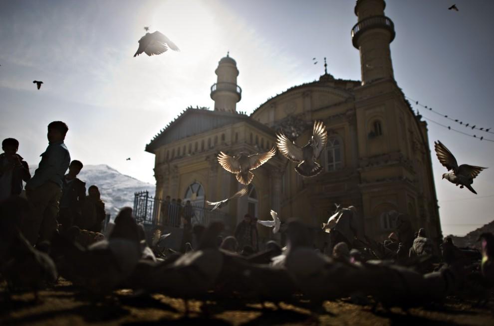 9. AFGANISTAN, Kabul, 16 lutego 2011: Gołębie na placu przed meczetem  Shah-Do-Shamshira. AFP PHOTO / DMITRY KOSTYUKOV