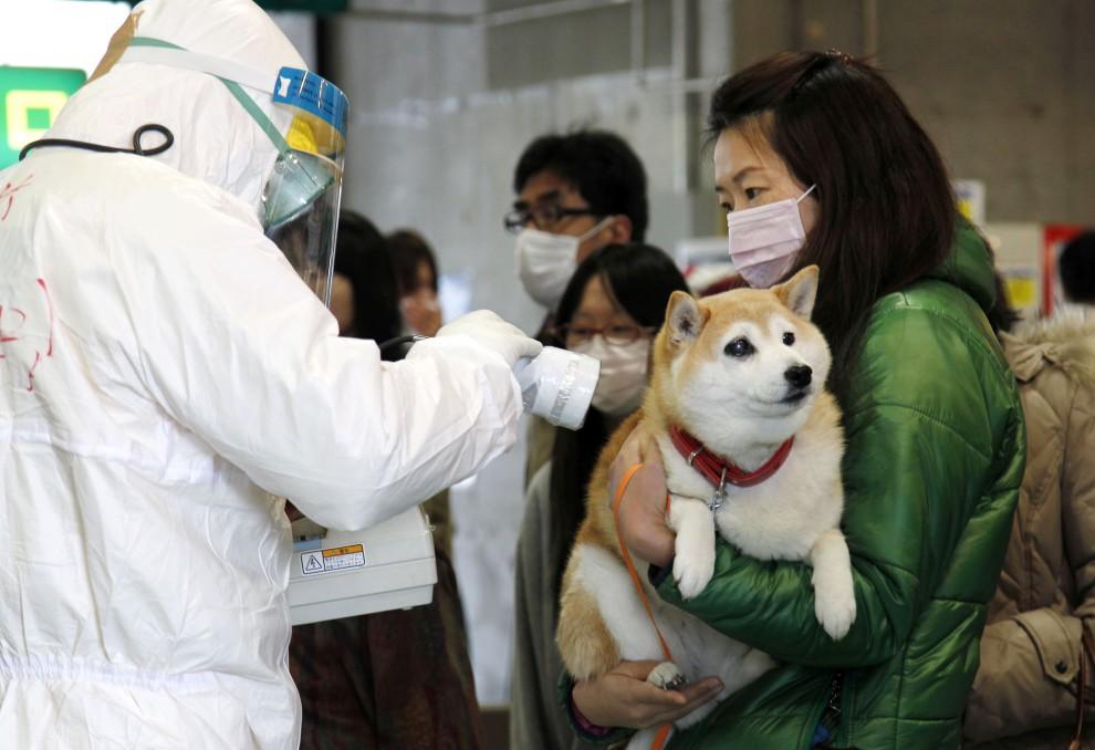 12. JAPONIA, Koriyama, 16 marca 2011: Ewakuowani mieszkańcy badani na siłę napromieniowania. AFP PHOTO / Ken SHIMIZU
