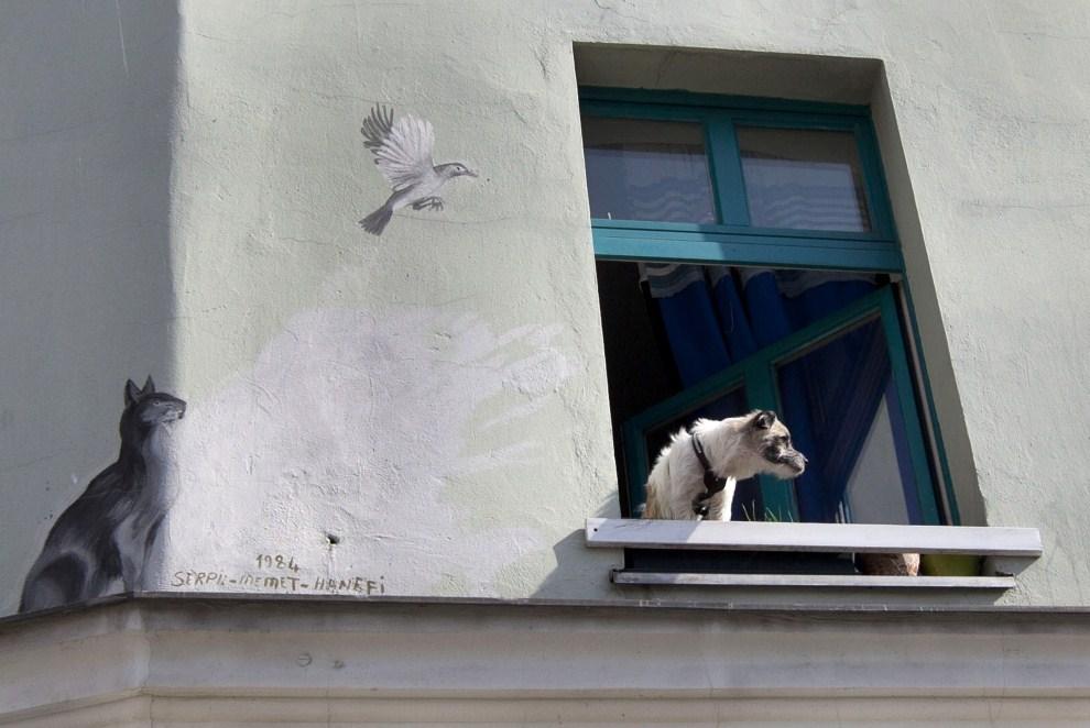 31. NIEMCY, Berlin, 21 marca 2011: Pies grzeje się w oknie pierwszego dnia wiosny. AFP PHOTO / DAVID GANNON