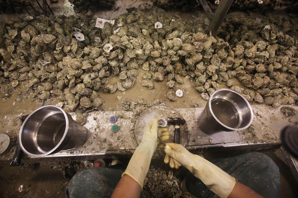 18. USA, Pass Christian, 15 kwietnia 2011: Pracownik Crystal Seas Oysters rozłupuje ostrygi łowione w okolicach Pas Christian. Tama/Getty Images/AFP