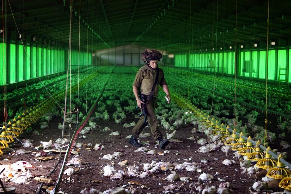 22. IZRAEL, Nir Oz, 8 kwietnia 2011: Izraelski żołnierz ocenia straty na kurzej fermie wyrządzone przez ostrzał moździerzowy. AFP PHOTO / JACK GUEZ