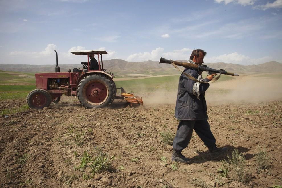 13. AFGANISTAN, Badakshan, 25 maja 2011: Funkcjonariusz służb bezpieczeństwa nadzoruje niszczenie uprawy maku. (Foto: Paula Bronstein/Getty Images)